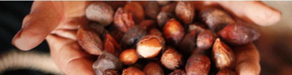 Arganöl erhält die Jugend, indem es die Zellen schützt. Diese Website liefert Ihnen umfassendes Hintergrundwissen über Arganöl.