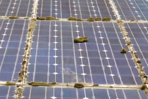 Solarfläche mit Moosstücken