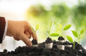 Jungpflanzen und Geldstücke in Erde