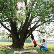 Mann hängt kopfüber an einem Baum mit großem Umfang