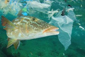 Ein Fisch im Ozean neben Plastiktüten