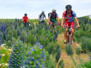 Biking Touren im Urlaubsgebiet