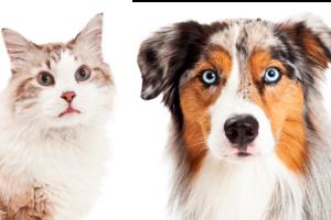 Hund und Katze schauen in die Kamera