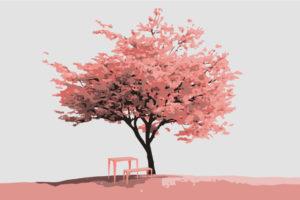 ein Kirschbaum in voller Blüte