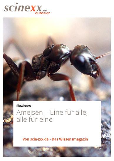 Ameisen - Blick ins Buch