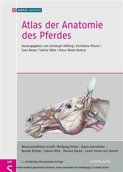 Atlas der Anatomie des Pferdes - Blick ins Buch