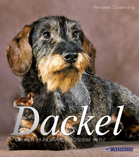 Dackel - Blick ins Buch