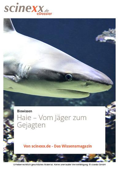Haie - Blick ins Buch