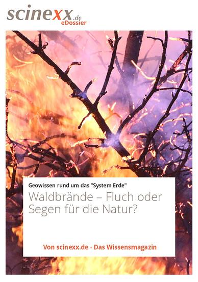 Waldbrände - Blick ins Buch