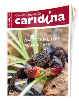 caridina - Garnele, Krebs & Co.