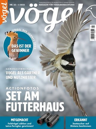 VÖGEL-Magazin für Vogelbeobachtung.