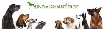 Hund als Haustier - Der Hunderatgeber