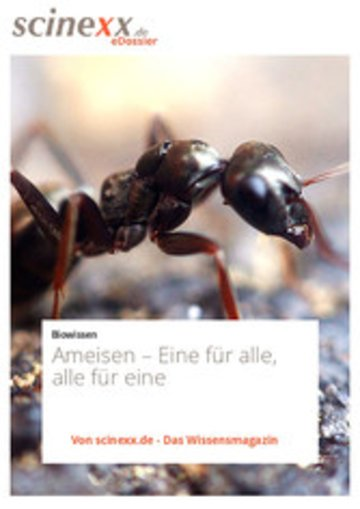 eBook Ameisen Cover
