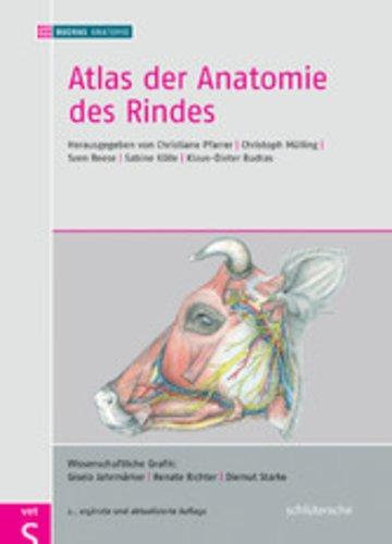 eBook Atlas der Anatomie des Rindes Cover